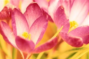 первоцветы - посланцы весны