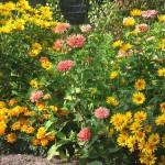 цветы в сентябре