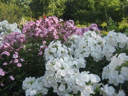 Фото цветов в августе