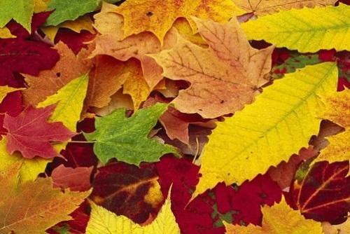 Как использовать опавшую листву
